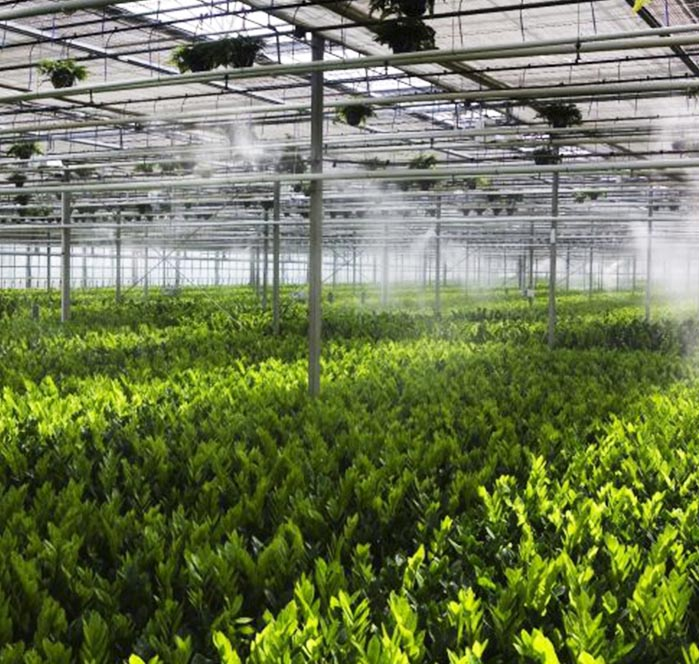 misting spray system emitting vapour into the air over agriculture crops